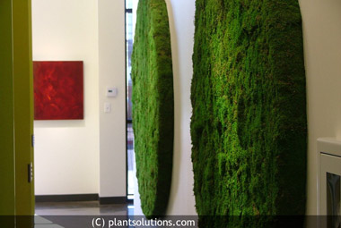 Minimalism, Greenery, and the Moss Wall Revolution
