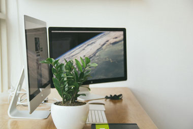 How Having A Plant On Your Desk Promotes Productivity